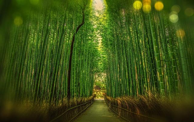 Kyoto e dintorni