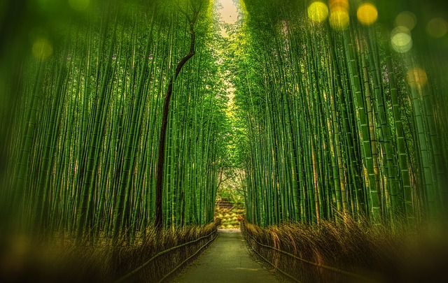 Foresta di Bomboo
