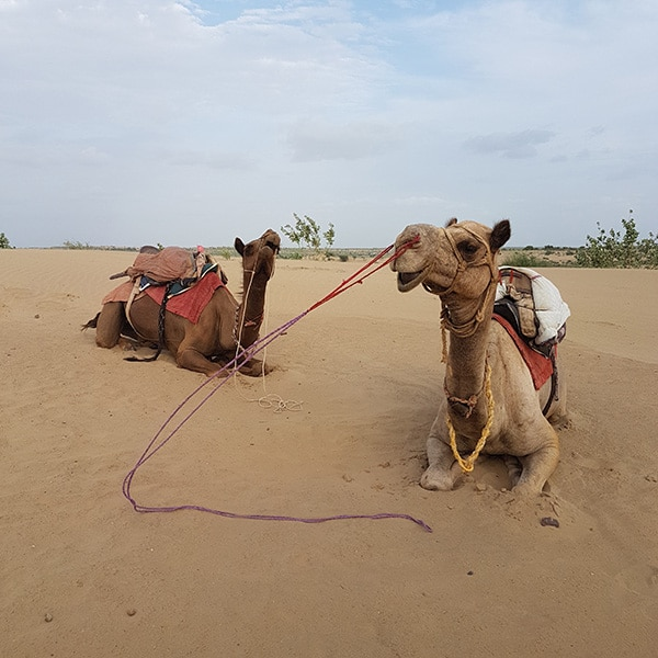 india thar desert