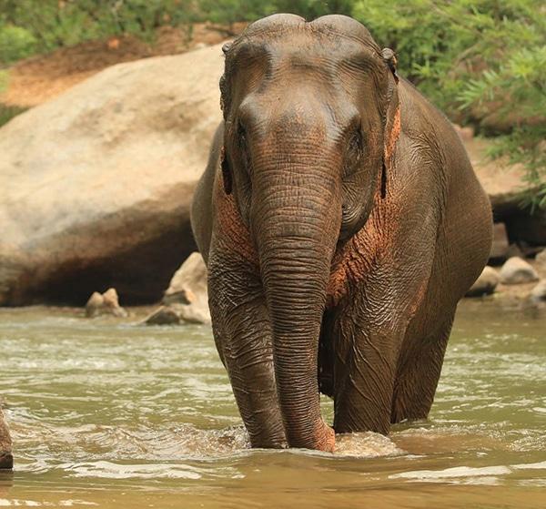 Bagno con elefanti Chiang Mai