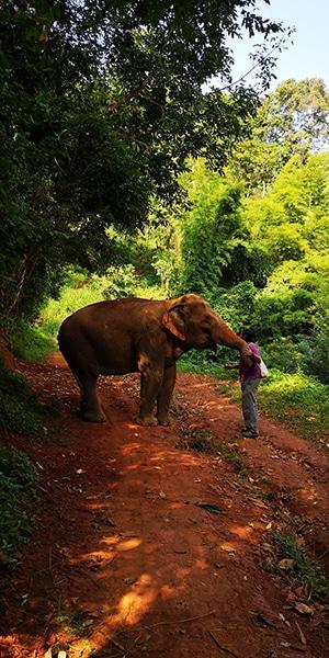 Tour elefanti Chiang Mai